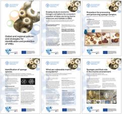SponGES FAO Infosheets