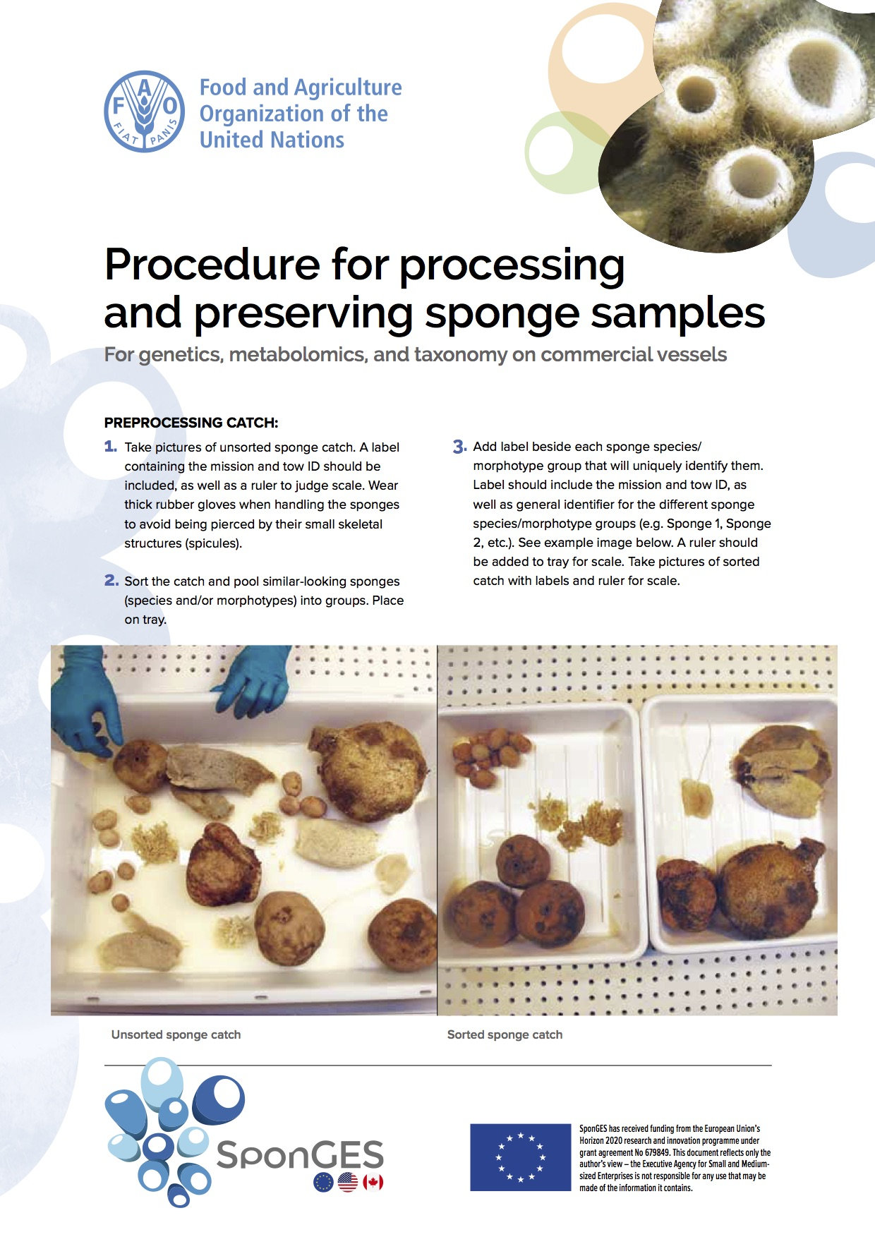 SponGES FAO Processing Preserving Sponges
