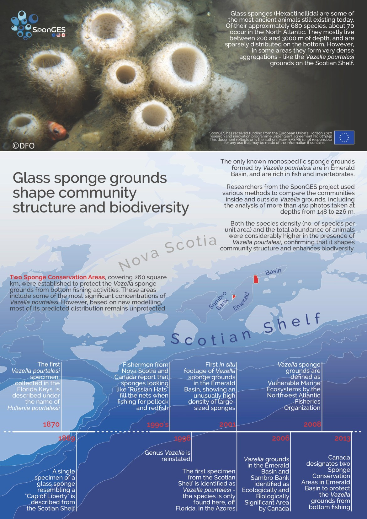 Why sponge grounds matter, and a little history of Vazella grounds