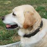 Review: Paracord Dog Collar