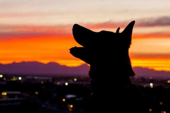 National K-9 Veterans Day | Photo Gallery