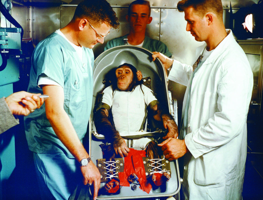 """Four Mercury missions carried chimpanzees into space before Alan Shepard's flight. """"Ham,"""" is shown here in the biopack couch for the MR-2 flight"""