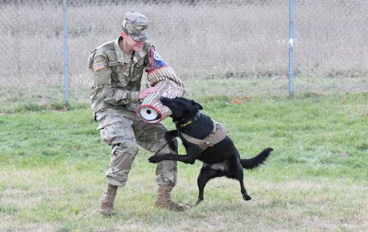 Military Working Dog Training US Army Military K9 Unit
