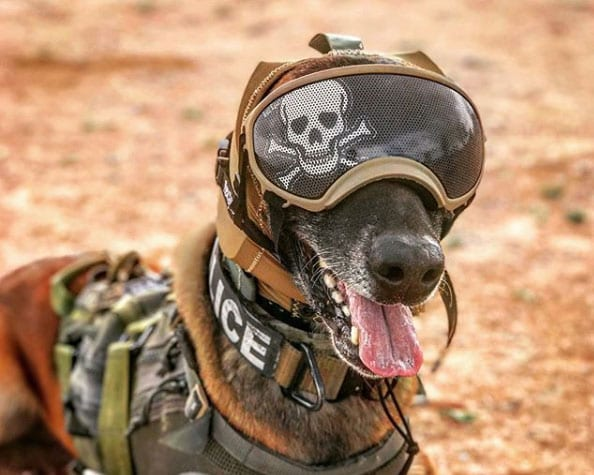 Military K9 hearing protection Working Dog Protection