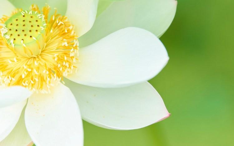 北海道地震のお見舞いの花