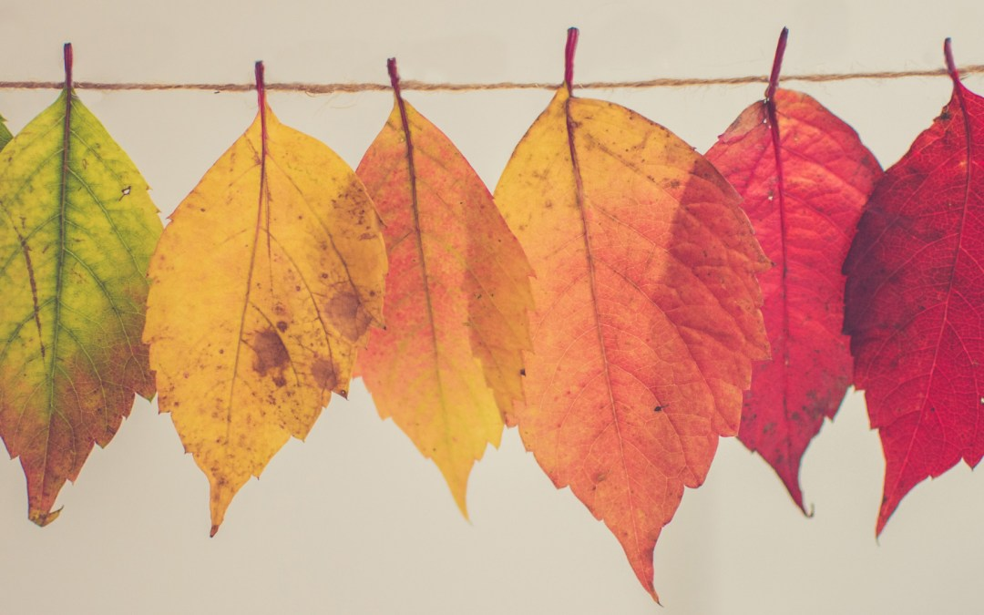 The Best Free Autumn and Fall Stock Photos