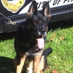 Sum it up: k-9 Rocco