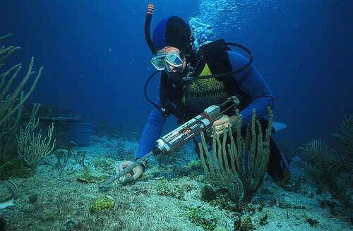 What Degree Do I Need To Be A Marine Biologist