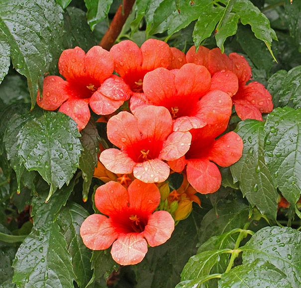 Above Ground Flower Garden