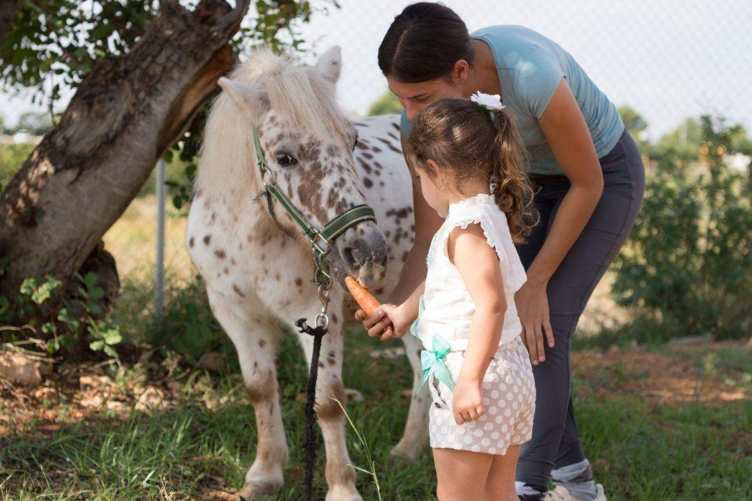 paseos a caballo valencia