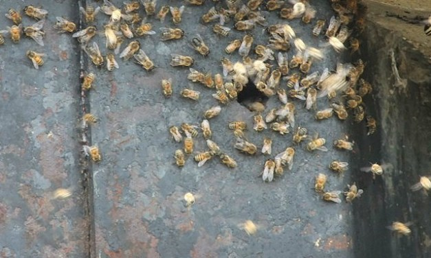 How to get rid of a beehive in the house