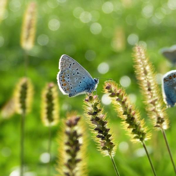 Umweltschutz Heidebad