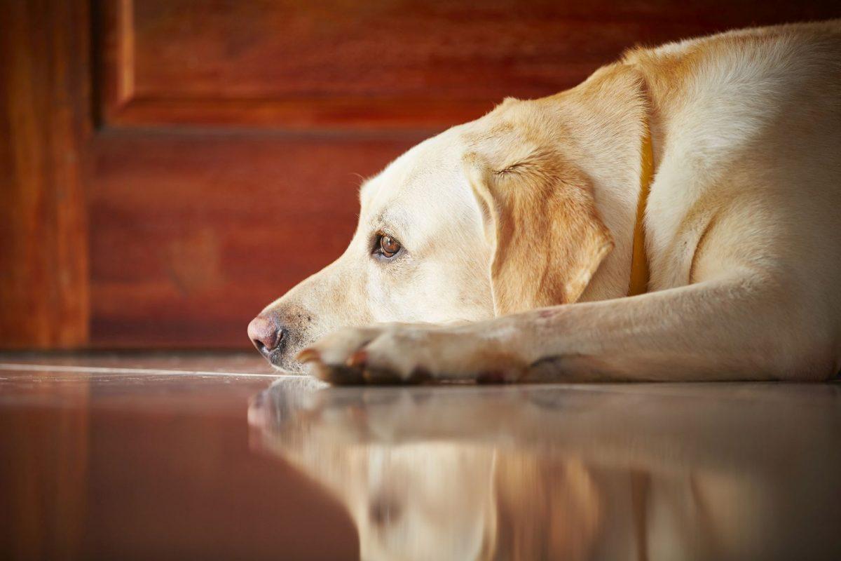 Tumore Beim Hund Ist Es Krebs Deinetierwelt Magazin