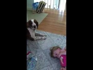 der kinder fluesterer hund