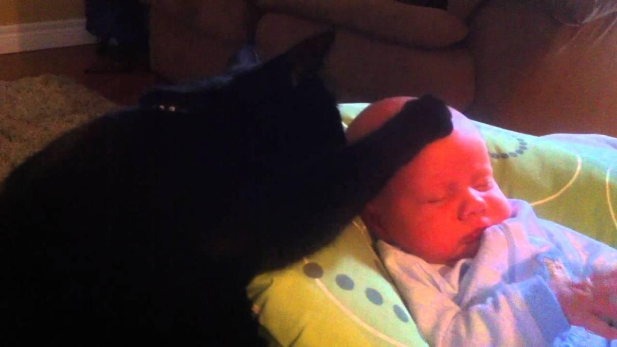 katze streichelt baby in den sch