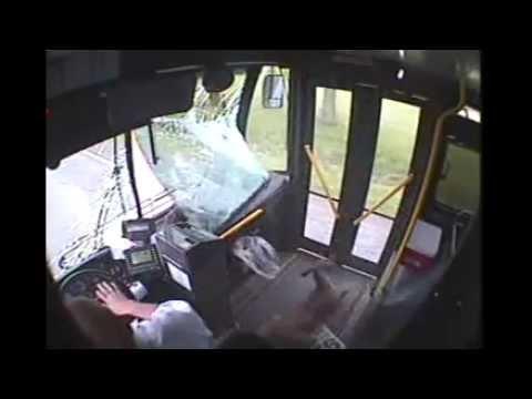 reh nimmt den bus