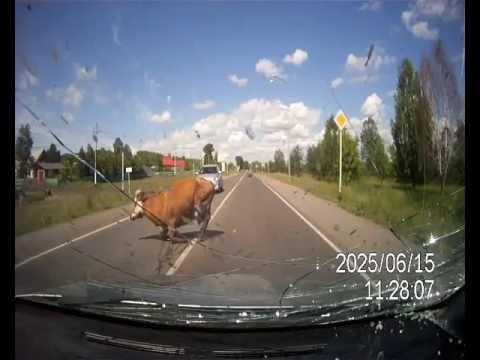 russian dashcam crash mit voegel
