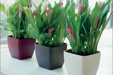 La luz en el cuidado de las plantas de interior