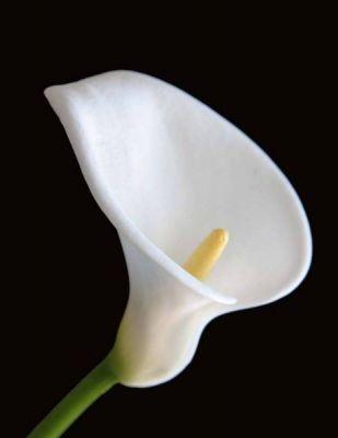 Las flores de temporada para tu boda en invierno