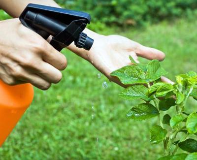 control de plagas en la jardinería