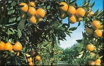 Cuidados de los árboles frutales