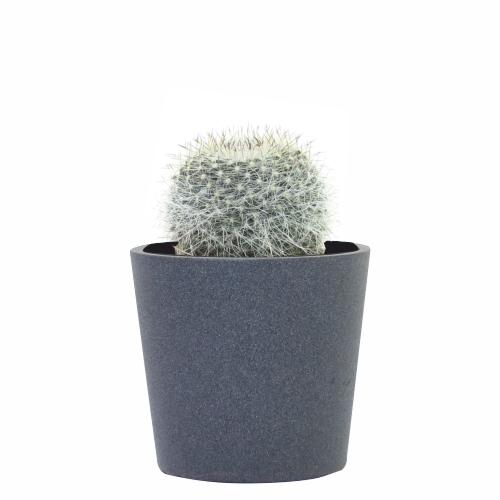 cuidar-un-cactus