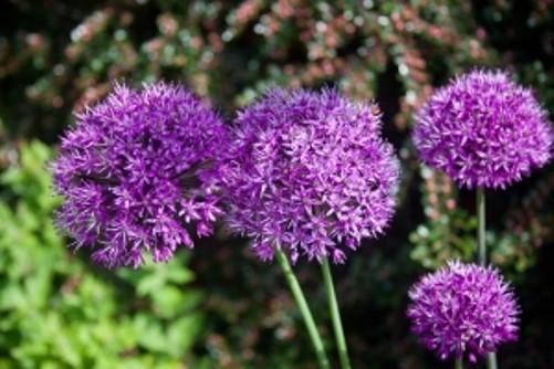 Tips Para Plantar Flores