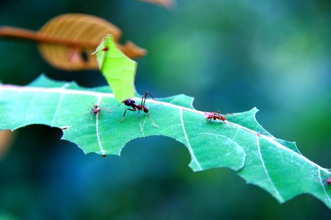 Insecticidas naturales para tu jardín
