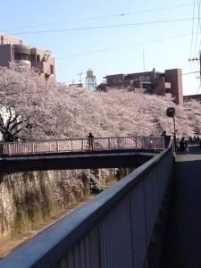 universitate tokyo