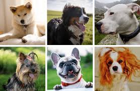 Top 5 Most Popular Dog Breeds in the World With Names ...