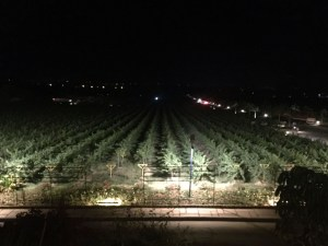 sula-winery