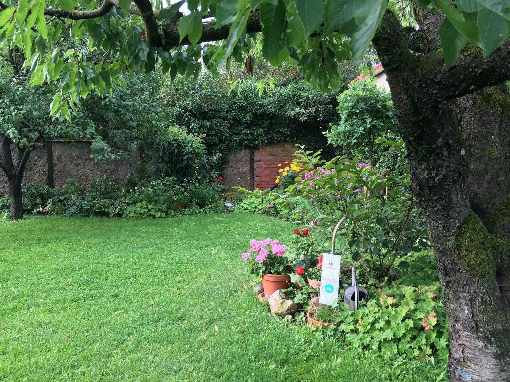 Für unsere Gäste halten wir ein schattiges Plätzchen unter unserem alten Kirschbaum bereit.