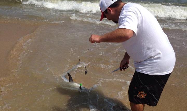 Josh Thomas with a thresher shark at Cape Henlopen today