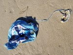mylar balloon, delaware, sussex county, beach clean ups