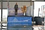 delmarva outdoors Expo, dock dogs, kent building, delaware, kent county