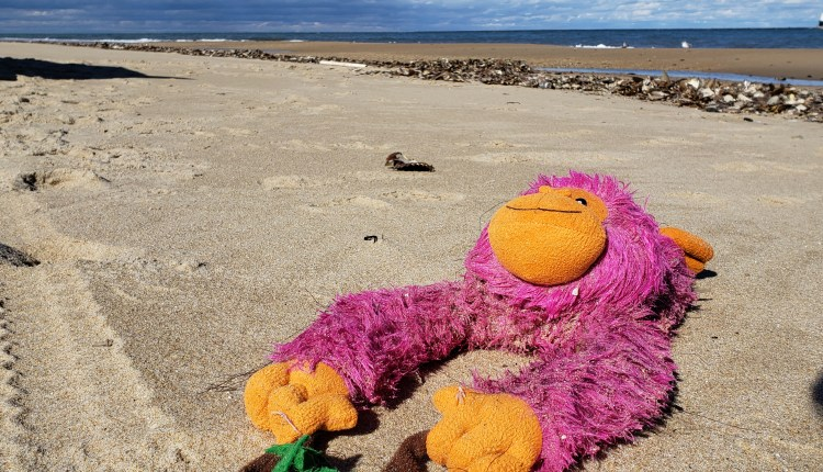 Monkey Chillaxin on the beach