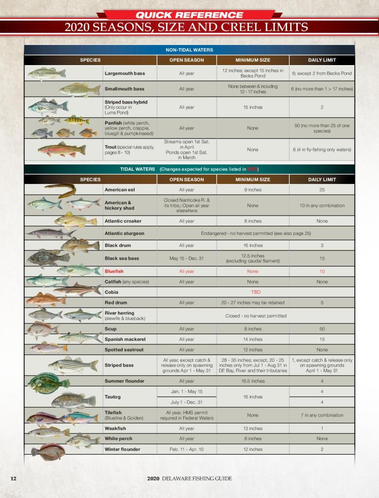 Delaware Fishing Guide 2020, creel limits