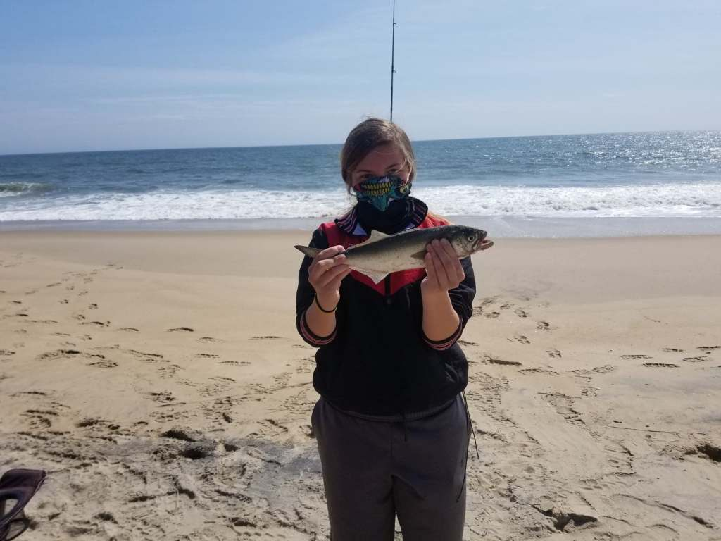 bluefish, delaware surf fishing, yellow eyed gator, snapper blue