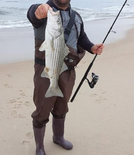 striped bass, rockfish, delaware surf fishing, beach fishing, delaware state parks, sussex county,