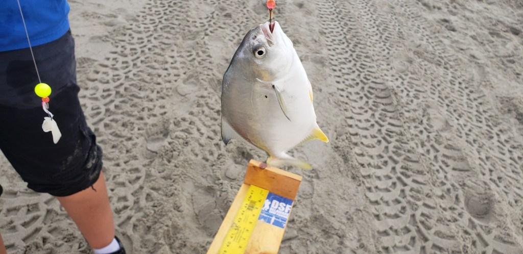 Broadkill Brawl, Broadkill Beach, Milton, Delaware Bay, pompano, fishbites