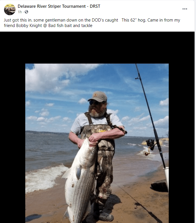 striped bass, migratory fish, delaware river, DOD, pennsville, delaware surf fishing