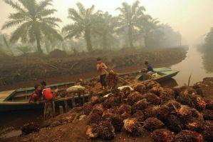 Listado de productos CON aceite de palma y su equivalente SIN.