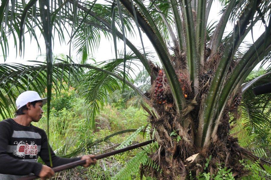 DEL CINE AL HOSPITAL Aceite de palma: ¿Qué dice la Medicina?