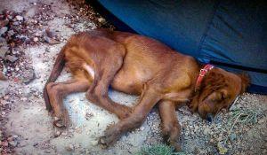 Perros y neurociencia: ¿mi perro me quiere? Homenaje a Tim.
