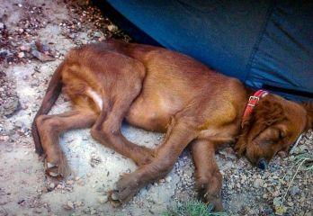 DEL CINE AL HOSPITAL Perros y neurociencia: ¿mi perro me quiere? Homenaje a Tim.