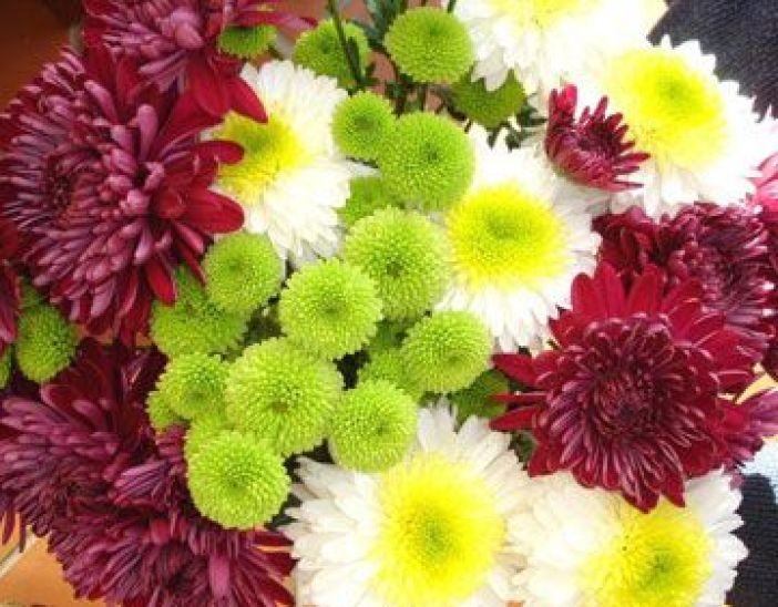 crizanteme-fls