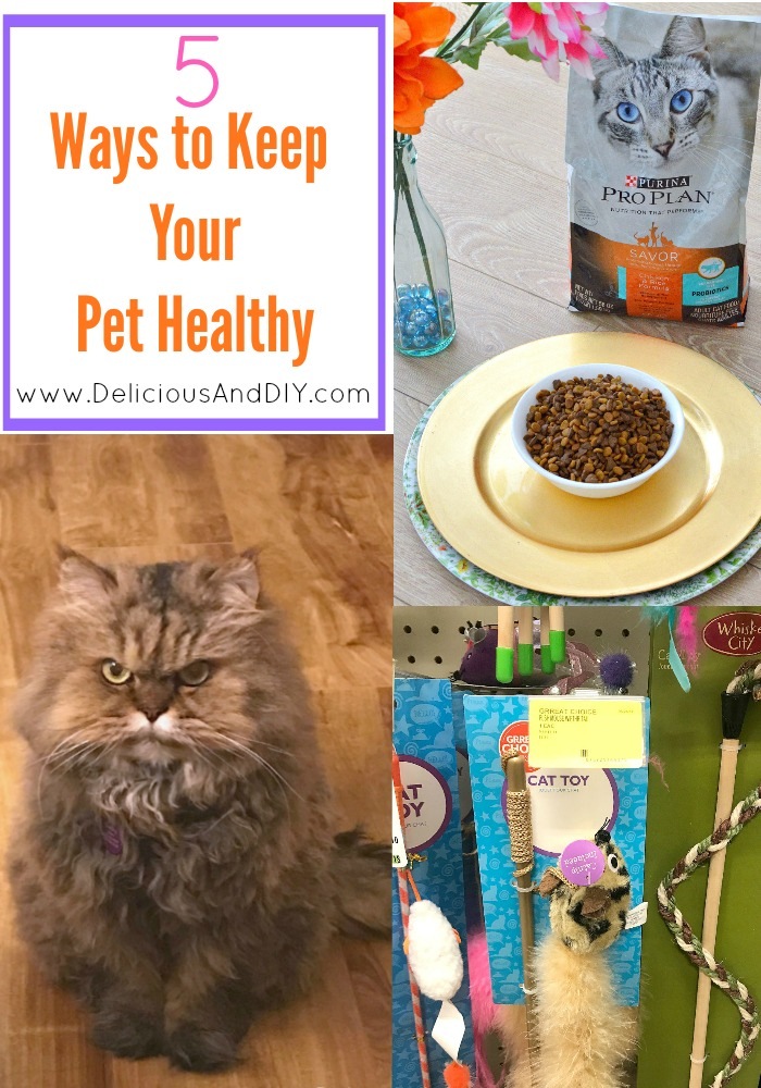 Learn the top 5 ways to keep your pet healthy by using Purina Pro Plan® Savor® Adult Cat Food, exercises, grooming and a few simple suggestions to keep your pet happy| Top 5 ways to keep your pet healthy| #FuelTheirPotential #ad