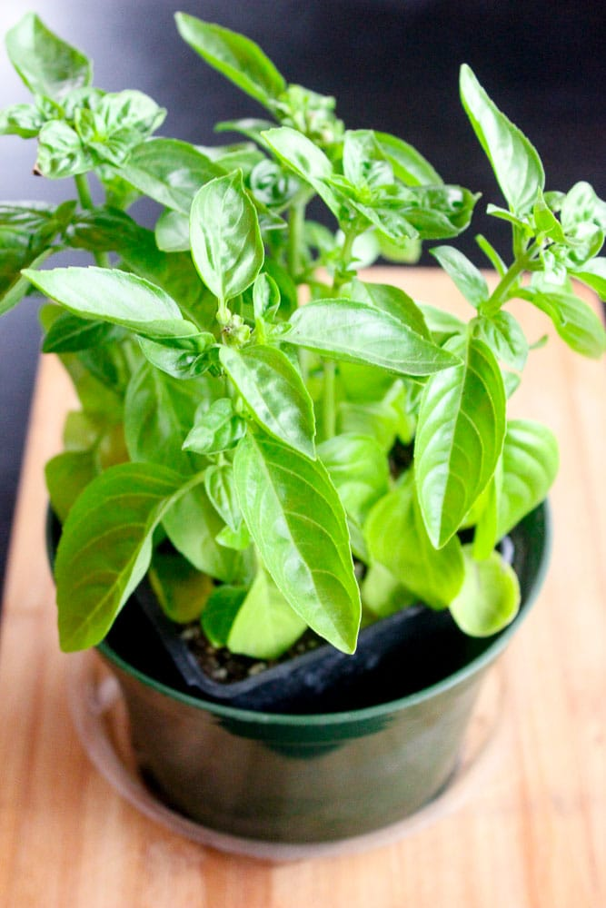 If you wish you could use more fresh herbs but feel like you can't afford large quantities of them, read on. With just a couple of quick tips, fresh herbs can be cheaper than you think.