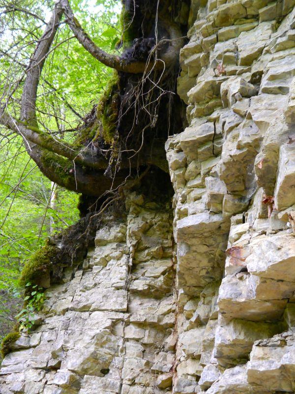 Steile Wände aus Muschelkalk säumen die Wutach