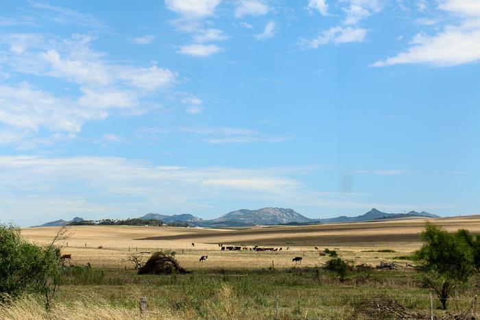 Trockenes Land: Swartland